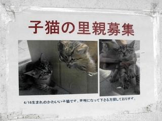 150803_大分合同新聞_里親見つかるも殺処分されてしまった子猫達_m_oita-D7BAA116-C213-42BA-8A55-15EF1731A46A_VGA