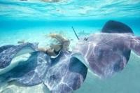 e39a9117e5ac0ca786eb098c501acfa7--deep-sea-diver-great-white-shark.jpg