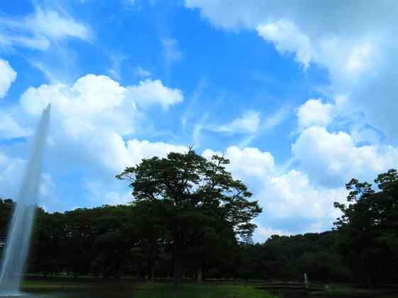 am代々木公園と善福寺川 186