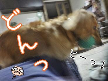 kinako3125.jpg