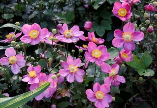 お花はかわいいな