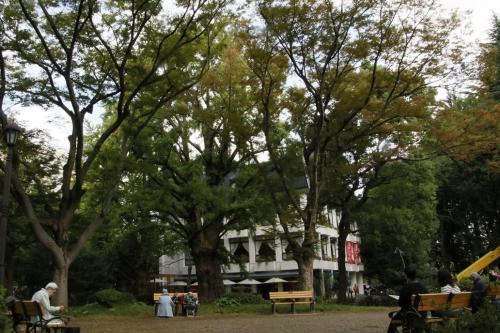 松本楼と銀杏の木