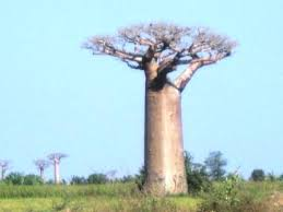 Baobab浦安