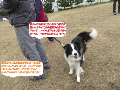 P1030475_convert_20150301130133.jpg