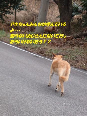 P2020350_convert_20150202203931.jpg