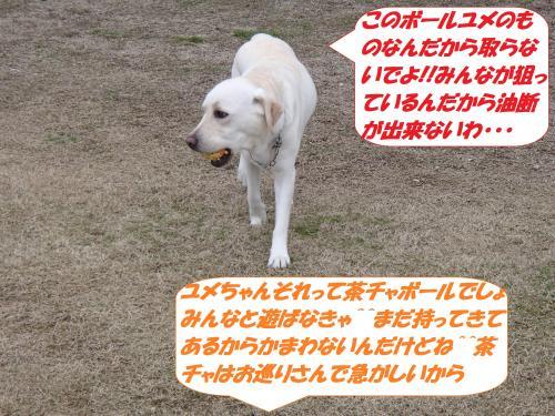 P2110449_convert_20150212132624.jpg