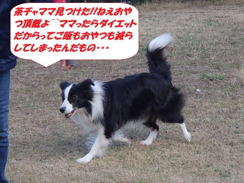 P3060791_convert_20150307130408.jpg