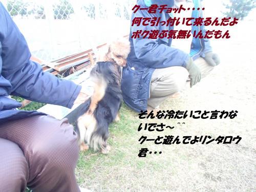 P3060792_convert_20150307130422.jpg