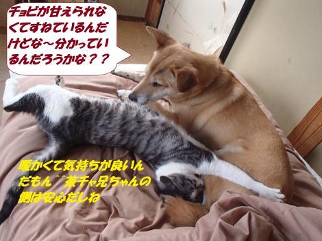 PC180245_convert_20141223123130.jpg