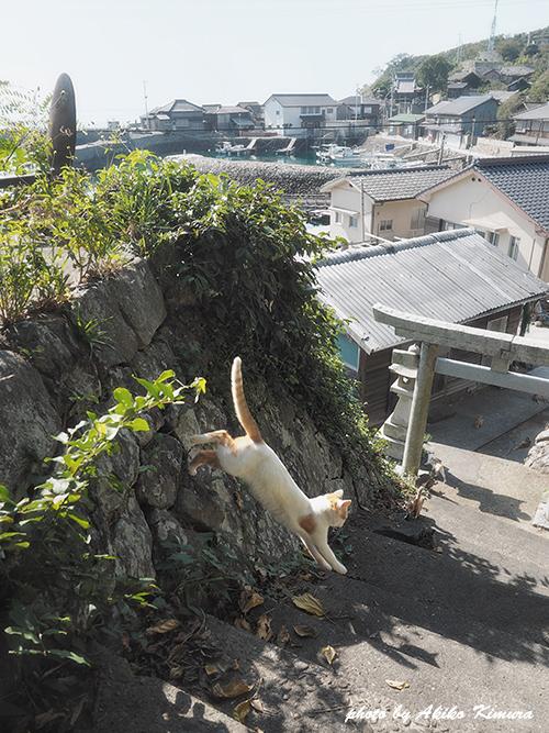 akiko_kimura_2015_02.jpg