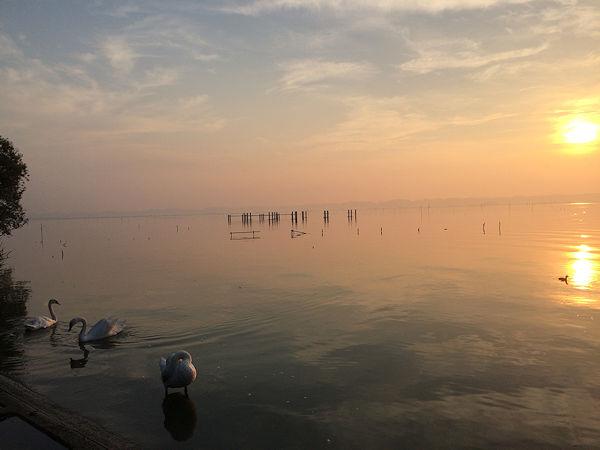 dawn11.jpg
