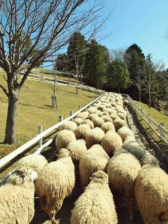 神戸市広報課 羊通勤ラッシュ