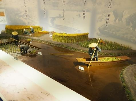 芦沼と稲作【信濃川大河津資料館】