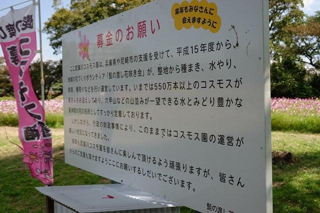 20181029 武庫川コスモス園 (25)