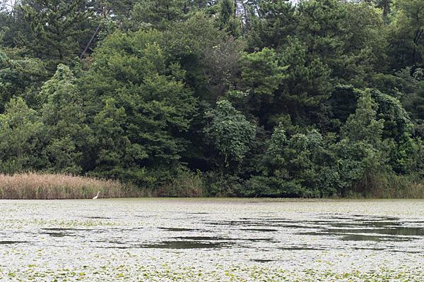 牧野が池-10