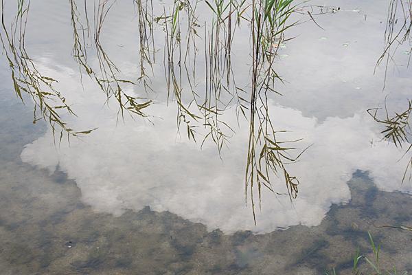 牧野が池-4