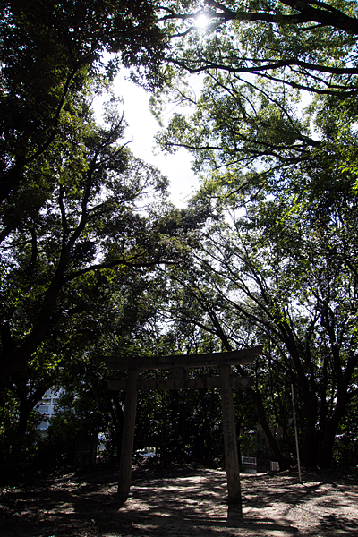 北大高畑津島社鳥居と木々の風景