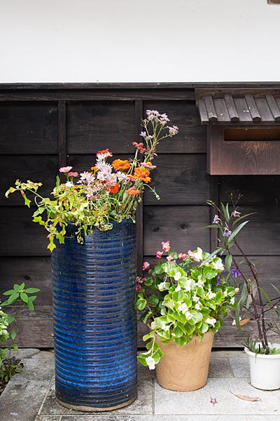 犬山寂光院秋の花たち