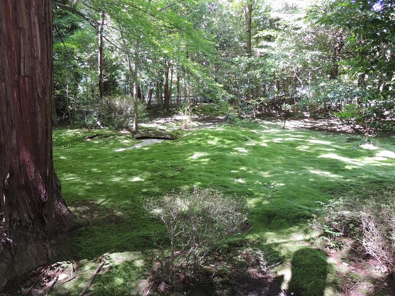 庭園 苔の緑が美しい