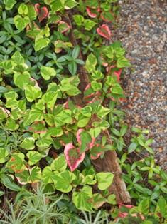 my-garden 004 (2)