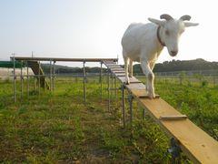 [写真]改良されたのぼり台を颯爽と降りてくるアラン