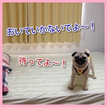 IMG_8090-1.jpg