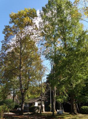 高蔵寺公園