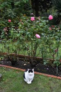 Junko The Cat and Roses