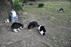 Tak, Mok, Deko and Kyi The Cats