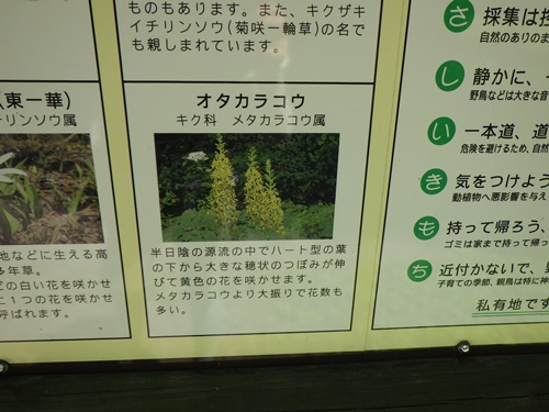 姫川源流6