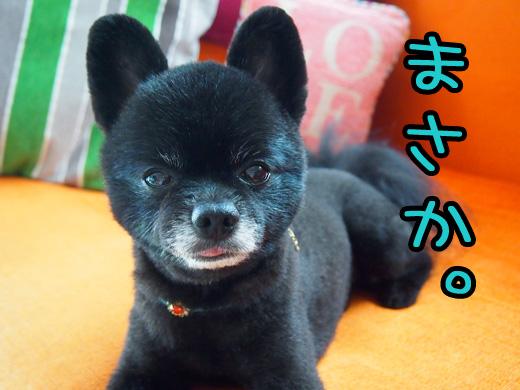 konokawaiibokuwooiteikukideha.jpg