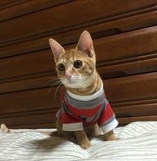 リンちゃん(O)IMG_3687