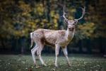 無料画像 鹿
