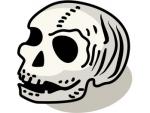 無料画像 頭蓋骨