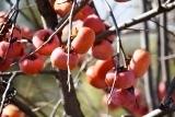 植物 (2)