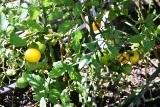植物 (5)