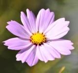 植物 (8)