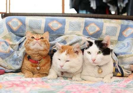 猫と コタツと お正月