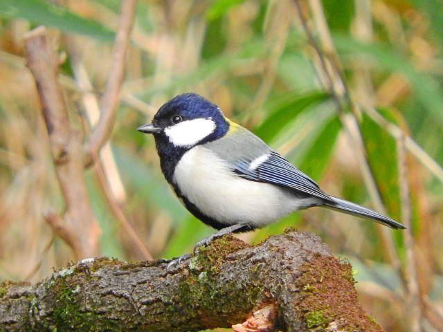 漢字の「鳥」と「烏」の微妙な違いには、実は深い理由があった?