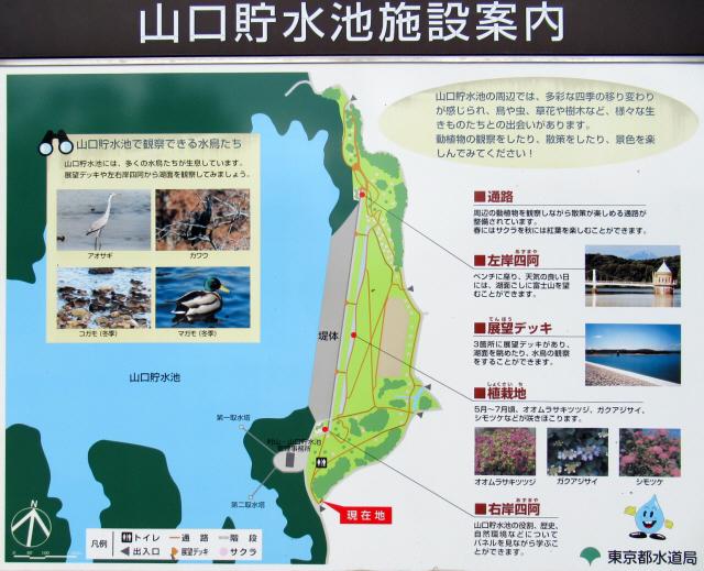 狭山湖の吊橋9
