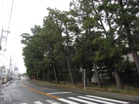 長沢の松並木
