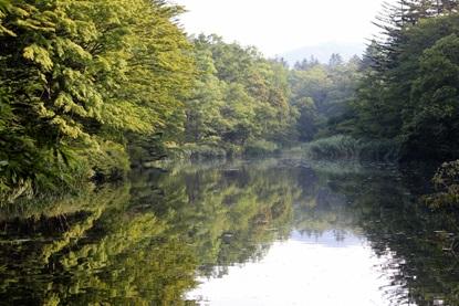 早朝の雲場池
