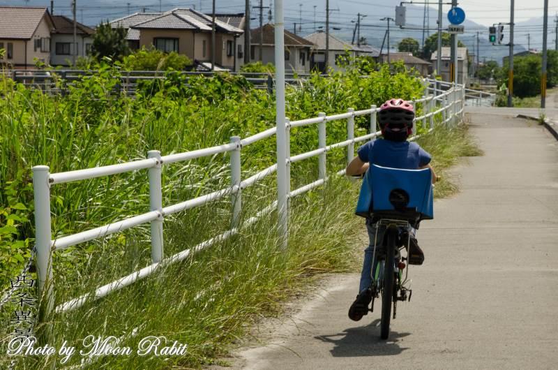 子供自転車に乗る少女 愛媛県西条市喜多川