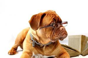 dog-734689_640_convert_20150819215505.jpg