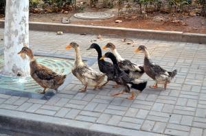 duck-21262_640_convert_20150821003113.jpg